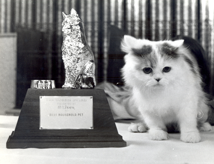 Time Warp, 1979: Hybrid breeds in spotlight at Cat Fanciers' Show
