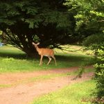 Deer stands by tree along dirt road