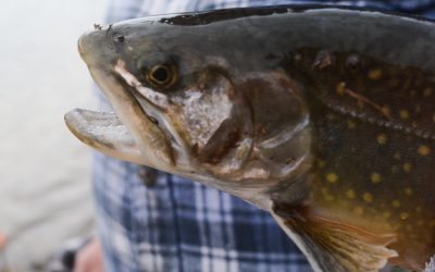 Ponds, small lakes offer advantages for trout anglers