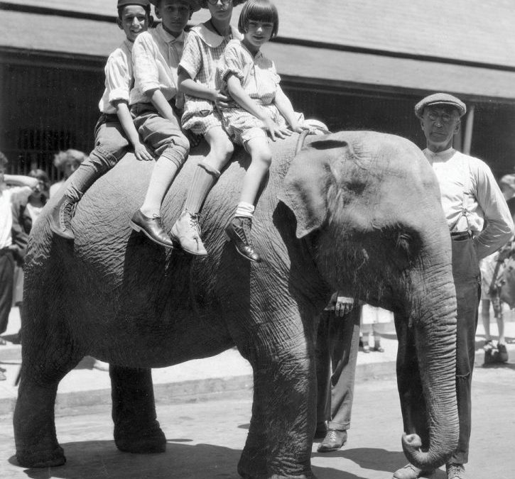 OTD – Campaign Kicks off for New Elephant for Nay Aug Park Zoo